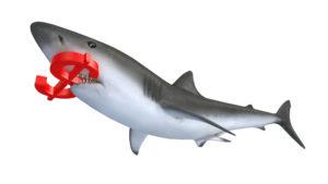 shark with dollar