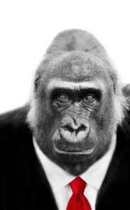 gorilla weigh